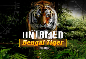 Have Friendship With Untamed: Bengal Tiger And Full Your Bag
